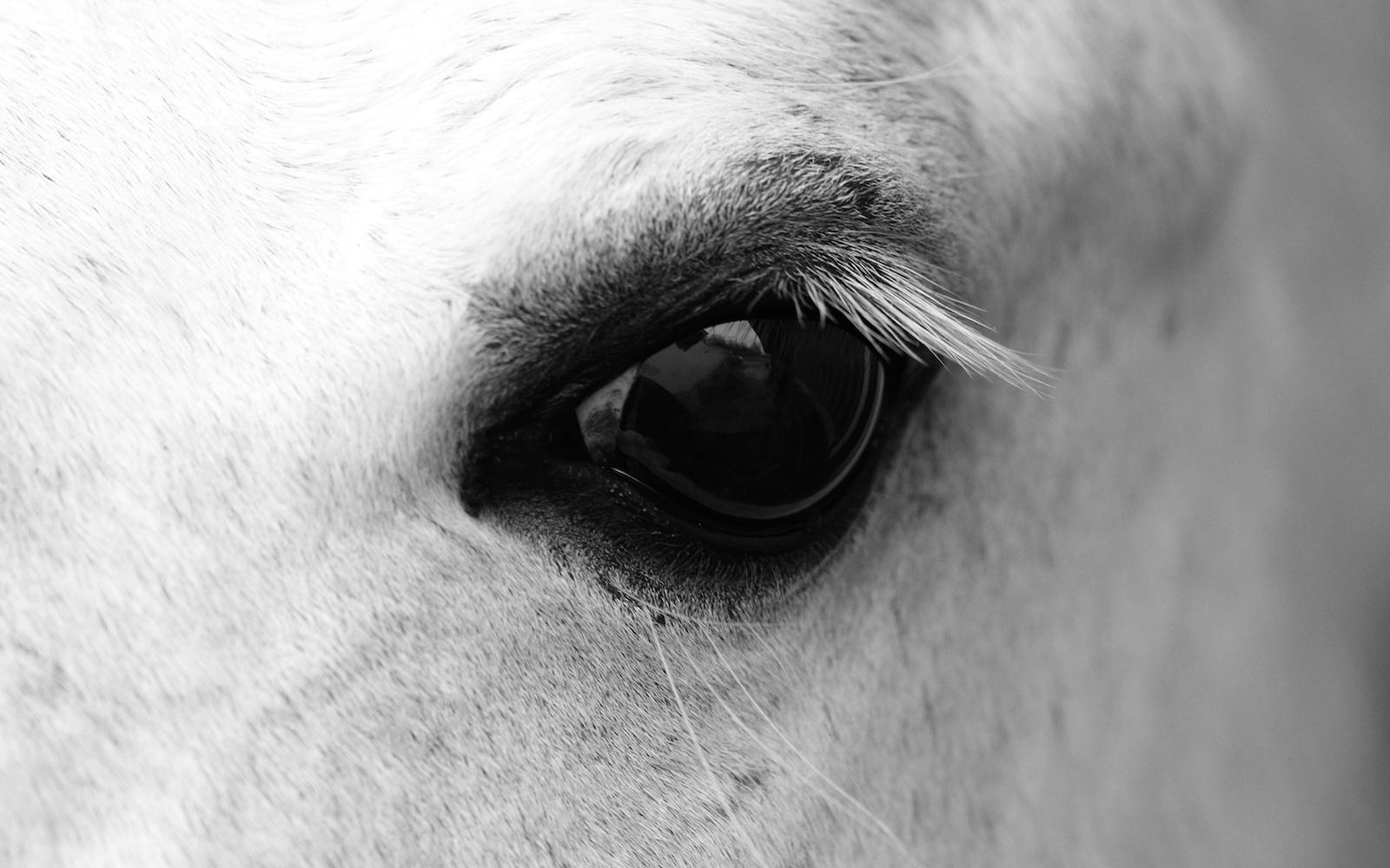 L'amicizia tra uomo e cavallo